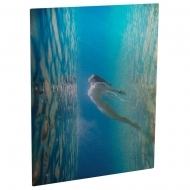 Photo Panel, Aluminium, Transperent, Gloss , 203.2 x 254 x 1.14 mm